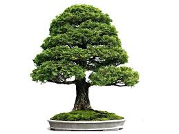 what does bonsai mean and symbolize
