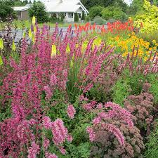 tips for a perfect perennial border