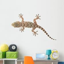 Brown Spotted Gecko Reptile Wall Decal Wallmonkeys Com
