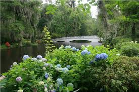 gardens at magnolia plantation