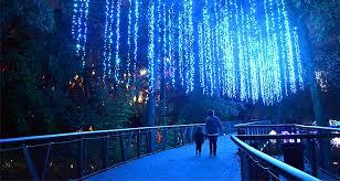 atlanta botanical garden shines bright