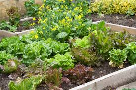 small vegetable garden plans layouts
