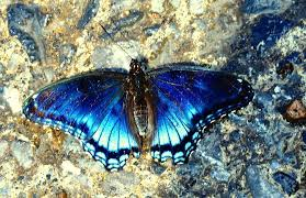 Butterfly Photograph by Adriana Holmes