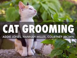Cat Grooming by Addie Jones