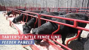 Tarter S Cattle Fence Line Feeder Panels Youtube