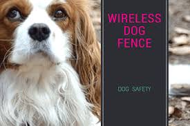 Best Wireless Dog Fences Best Invisible Dog Fences For 2020 To Keep Your Dog Safe