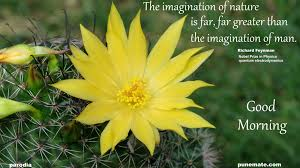 richard feynman on imagination of nature and man punemate