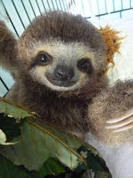 wallpaper cute sloth pics funny