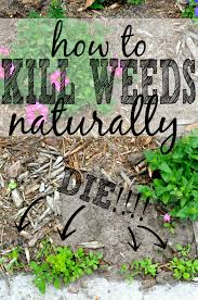 get rid of weeds naturally