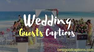 funny wedding captions for guests picture album