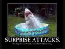 funny shark pics you