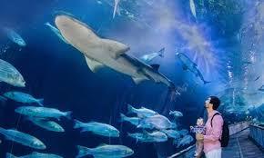 aquarium s in monterey ca