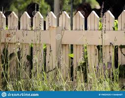 White Picket Fence In A Field Stock Photo Image Of Stark Environment 180224222