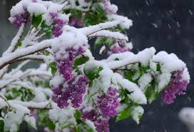 Snow on Mother's Day in Upstate NY? It's possible again ...