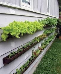 20 vertical gardening ideas for turning