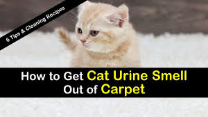 urine smell out of carpet