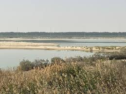 Local Guides Connect - Flamingo's at the Wathba Wetland Reserve ...