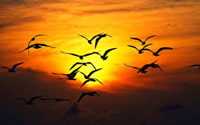 صور غروب الشمس احلي صور الغروب بجودة Hd ميكساتك
