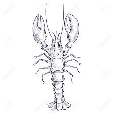 Vector Drawing Lobster Royalty Free ...