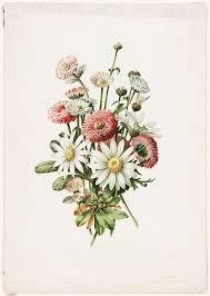 Pin by addie thompson on art // prints   Botanical drawings ...
