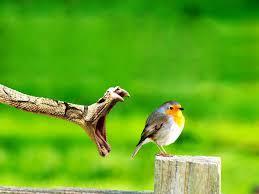 صور عصافير عصافير ملونة نادرة مساء الخير