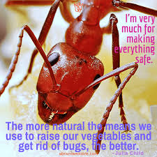 natural insect repellent fly deter