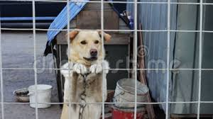 The Dog Is Barking Behind A Fence Stock Video Video Of Friend Attack 61463905
