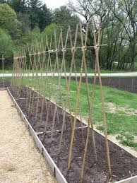Which Trellis Is The Best Trellis Seed Savers Exchange Blog