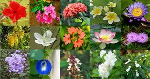 flowers in kerala diffe species