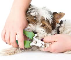 how to trim your dog s nails without