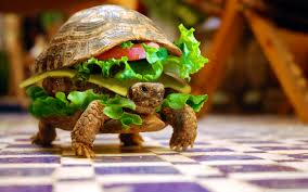 cheese turtle burger by k23 4k hd