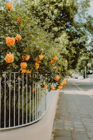 Orange And Green Flowers On White Wooden Fence Photo Free Path Image On Unsplash