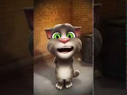 tom cat es funny you