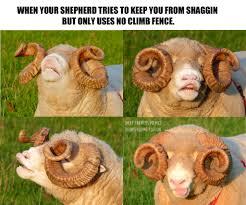 Sheep Farmers Memes Photos Facebook