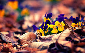 fall flowers wallpapers wallpaper cave
