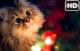cute cats kittens wallpaper hd cat