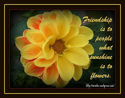 flower quotes about friendship quotesgram by quotesgram flower