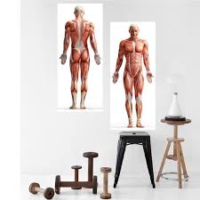 Skeletal Map Wall Decal Human Body Wall Decal Muscle Groups Of The Human Body Wall Sticker Human Body Art Map Wall Decal Sports Wall Decals Human Body Art