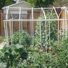 vegetables in a backyard garden