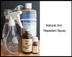3 best homemade ant repellent sprays