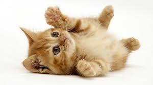 صور قطط حلوه صور قطط قمرات 2020 قطة جميله 2020 Photos Cats