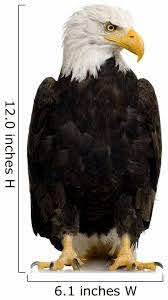 American Bald Eagle Wall Decal Wallmonkeys Com