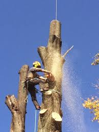 Tree Removal FAQs | Precision Corporation in Cleveland OH