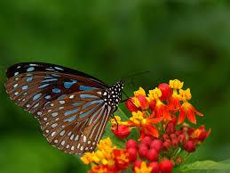 صور فراشة احلي صور الفراشات بألوان خيالية وجميلة ميكساتك
