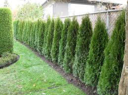 Corner Garden Fence Landscape Ideas Jpg 1024 768 Fence Landscaping Privacy Landscaping Backyard Landscaping