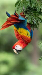 parrot macaw colorful feathers
