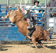 Bucking Bull Rider Wall Decal Wallmonkeys Com