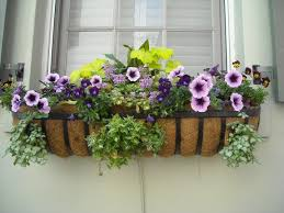 best plants for window boxes sun or