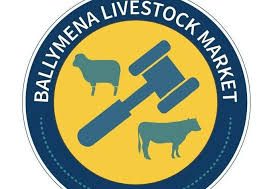 Beef cows sell to £1,393 for 700kg at Ballymena Mart | Farming Life