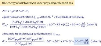 energy is released in atp hydrolysis